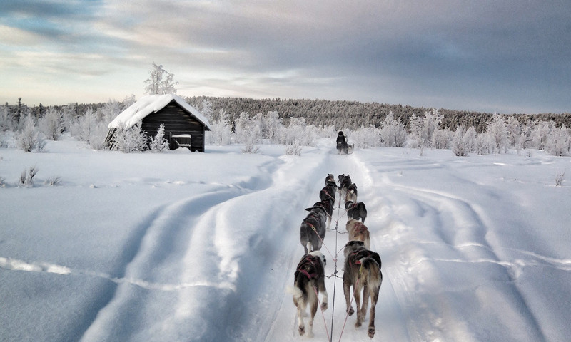 Dog- sled in Tromso, Norway